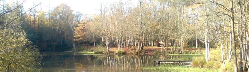 woods-lake